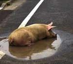To an optimist, even the smallest puddle is a wallow